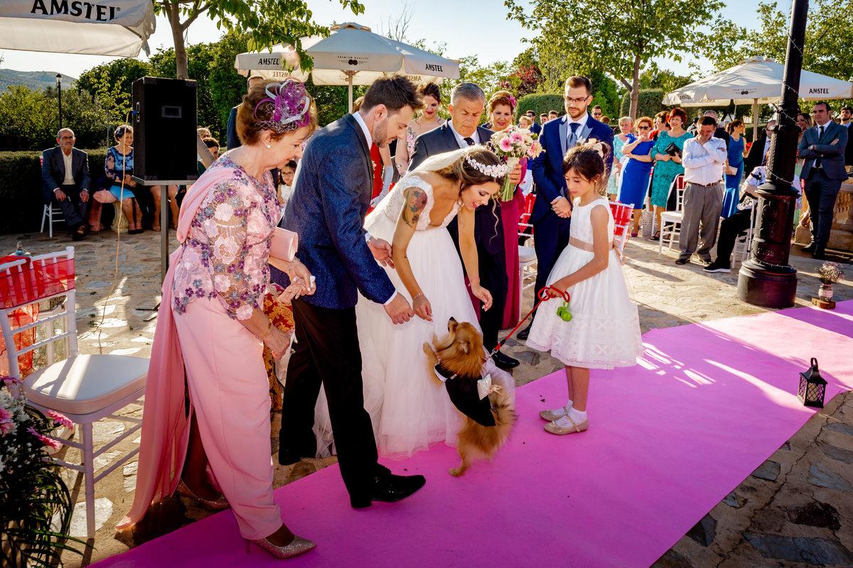 boda con perros